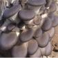 平菇食用菌包 �N植菌子
